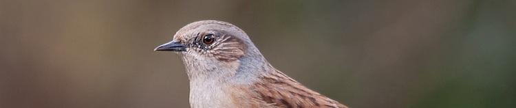 Vogelnieuws en lawaaivarken