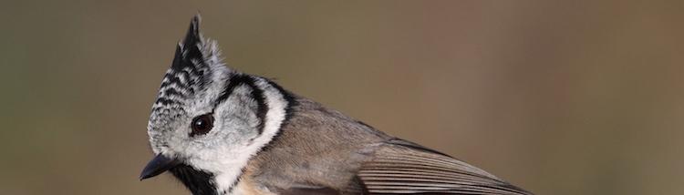 Transfer- en vogelnieuws