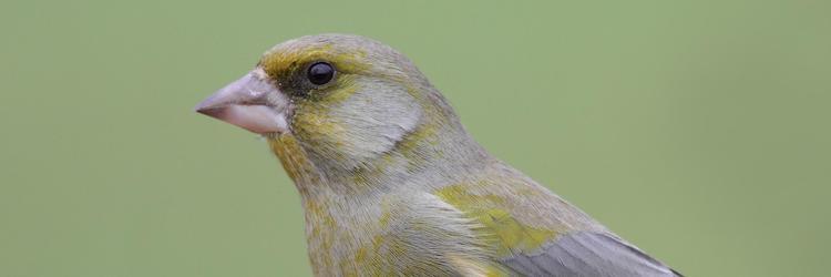 Eet- en vogelnieuws